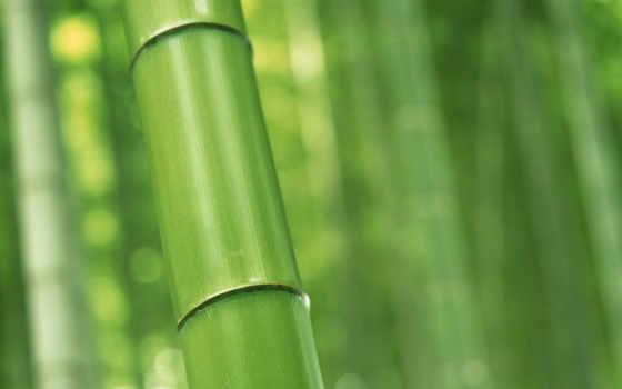 ecran, fond, vert, bambou, albums, бамбук, fonds, plan, sur,