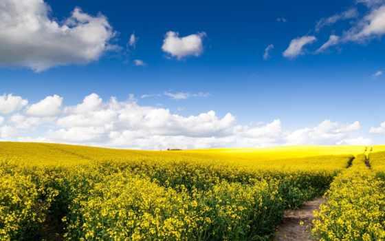 природа, рапс, поле, margin, oblaka, картинка, дорога, небо, раздолье,