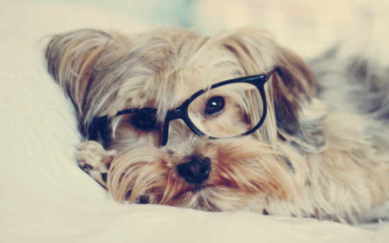 собака, очках, очки, песик, прикольные, собаки, собакой,