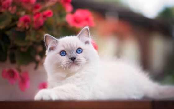 cute, кот, коллекция, котенок, animal, собака, best, loaded, уж, фокс