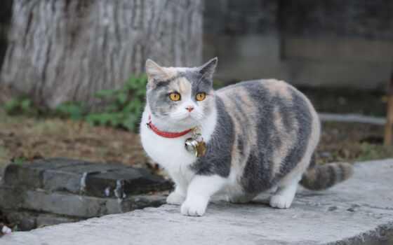 кот, ошейник, flea, pet, пассатижи, month, предотвратить
