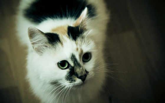 шерсть, кот, глаза