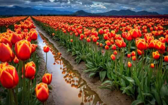 природа, flowers, цветы,