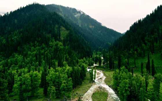pakistan, bosques, free,