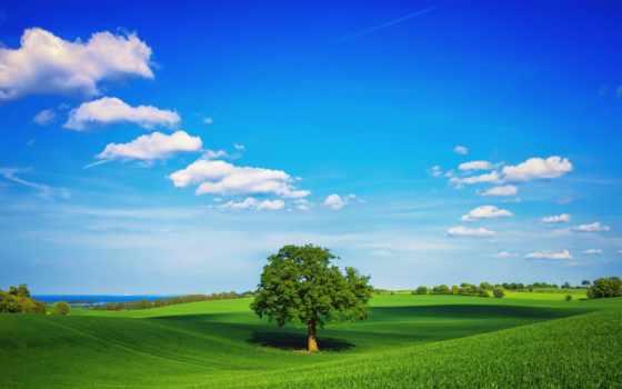 дерево, поле, небо, summer, oblaka, зелёный, трава, одиночка, plain,
