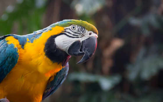 animals, birds, desktop, yellow, resolutions, macaw, widescreen,