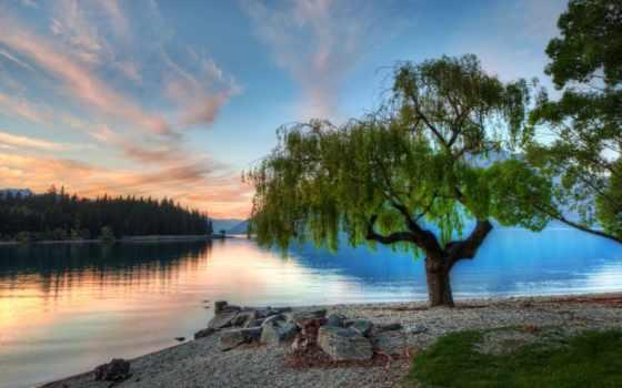 дерево, planted, water, streams, like, озеро, trees, ratcliff,