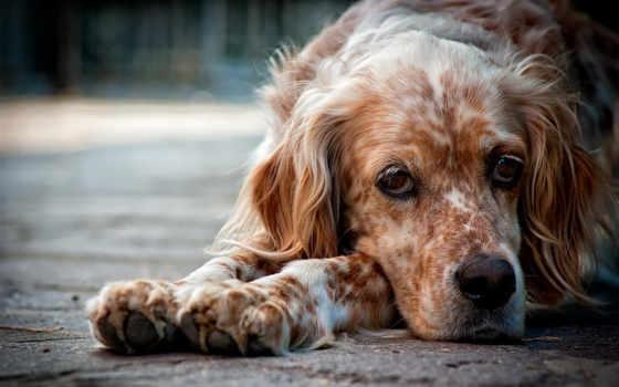 собака, time, их, собаки, собак, животных, treatment, симптомы, украшения,