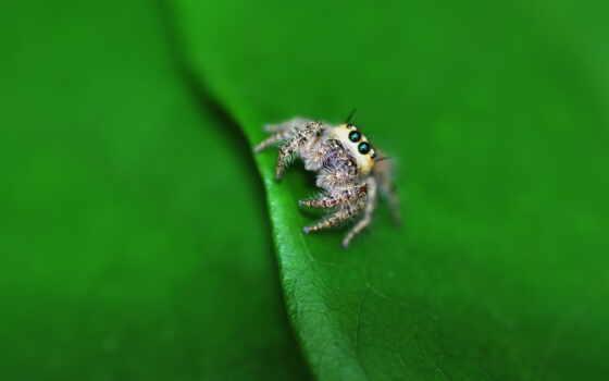 паук, макро, nasekomyi, уж, loaded, best, лист