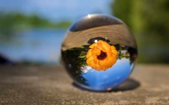 цветы, размытость, бутон, растение, шарик, природа, blurry, фон, steklyannyi