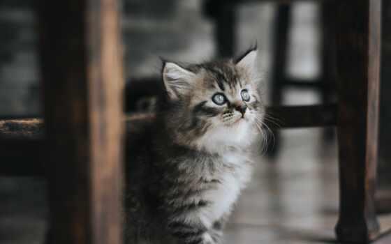 human, кот, animal, organization, jmena, pro, помощь, indonesia, граф
