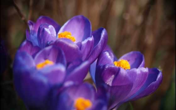 часть, фиолетовый, макро
