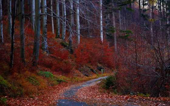 осень, лес, листья