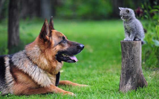 собака, кот, собаки