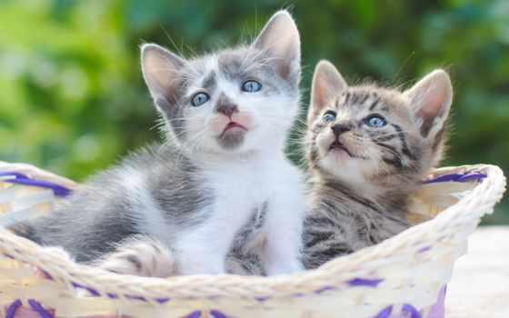 кошки, котята