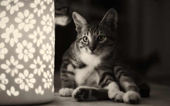 кот, животные, игры