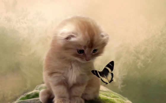 котенок, бабочка