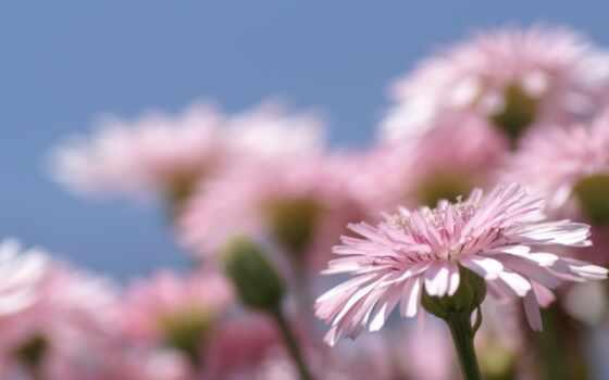 цветы, марта