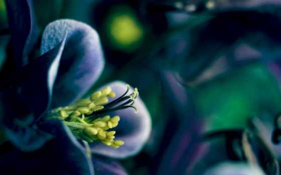 цветы, волшебные, марта