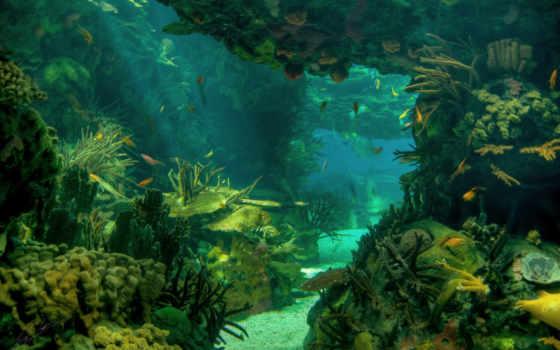 морское, дно, more, пейзаж,