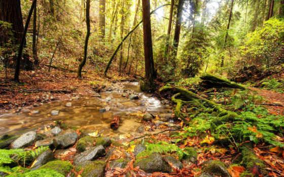 ручей, лесу, лес