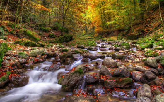 ручей, free, природа, изображение, desktop, forests, скалы, rivers,