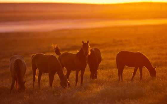 сол, pôr, cavalos, natureza, you, parede, paisagem, collector, звезд,