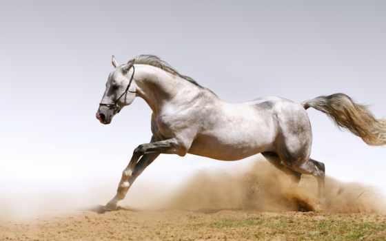 лошади, кони, лошадь, понравилось, zhivotnye, рисунки,