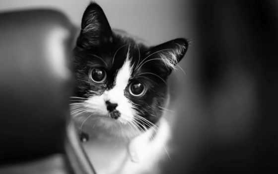 кот, фон, black, лапа, white, mobile, телефон