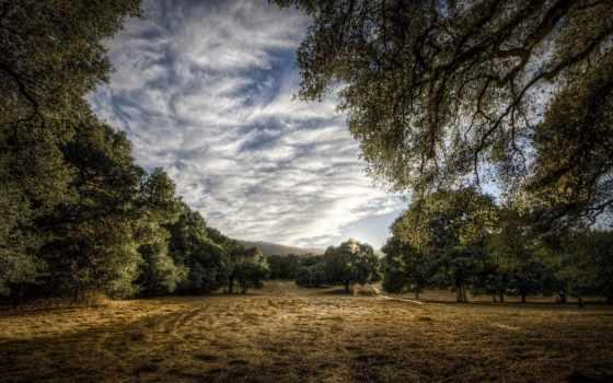 природа, фото Фон № 6633 разрешение 1680x1050