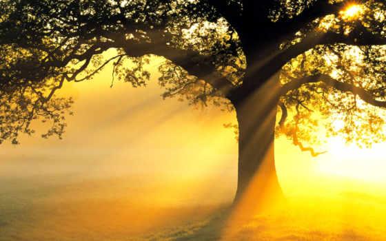 природа, natural, scenery, самый, free, pictures,