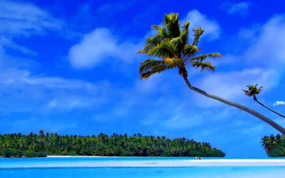 острова, каймановы, еда