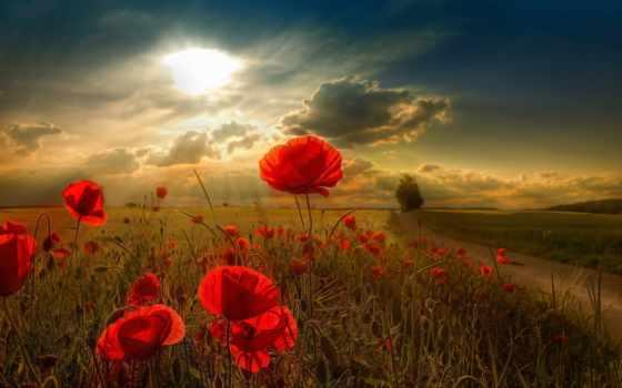flowers, cvety, sun, поле, poppies, cornflowers, тучи, февр,