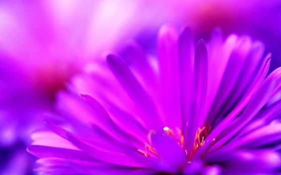 cvety, purple, макро