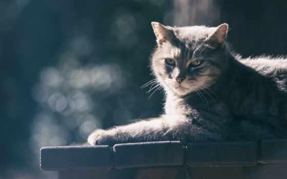 кот, гобелен, картинка, взгляд