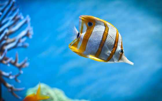 fish, wallpaper