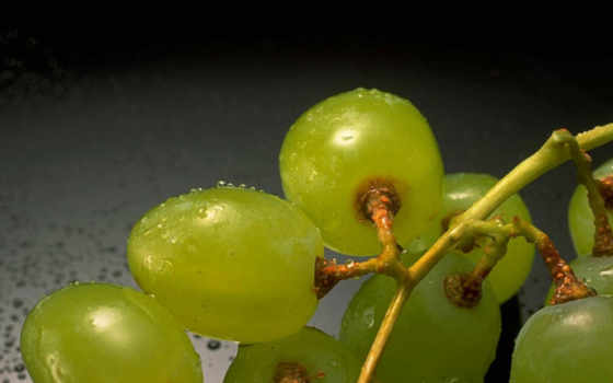 виноград, винограда, травы