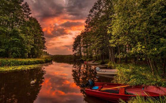 лес, природа, закат