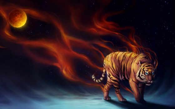 тигр, усилитель, wide