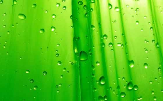 зелёный, капли, макро