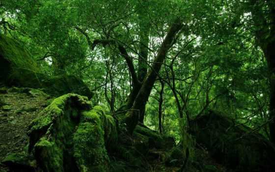 jungle, зелёный, мох, лес, лианы,