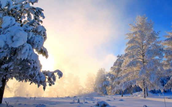winter, природа, снег, trees, туман, картинка, кусты, sun,