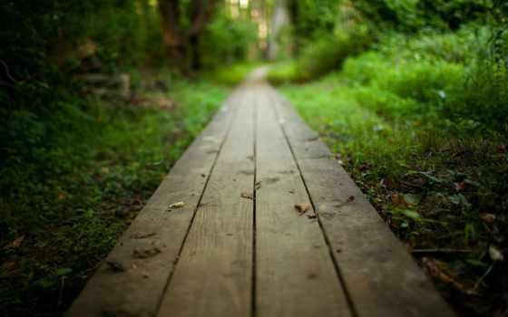 дорога, путь, природа, лес, перспектива, park, тропинка, wooden,