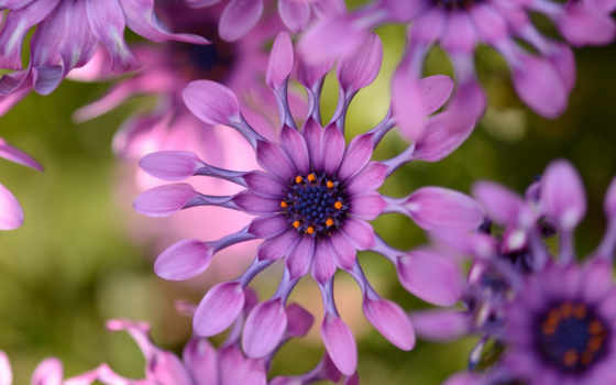 цветы, flowers, free, mobile, категория, tags, posted,