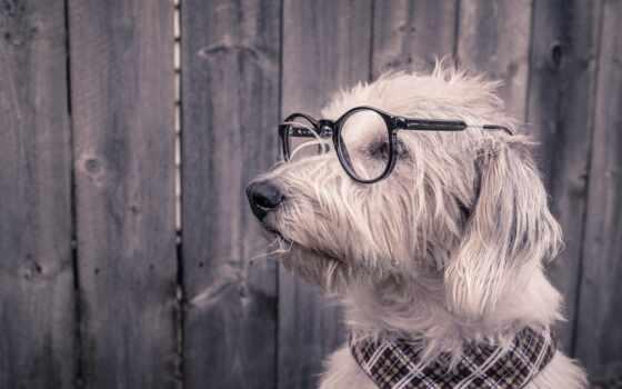 собака, glass, ноутбук, фон, point