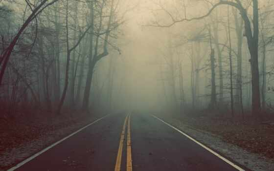 дорога, лес Фон № 31875 разрешение 1920x1080