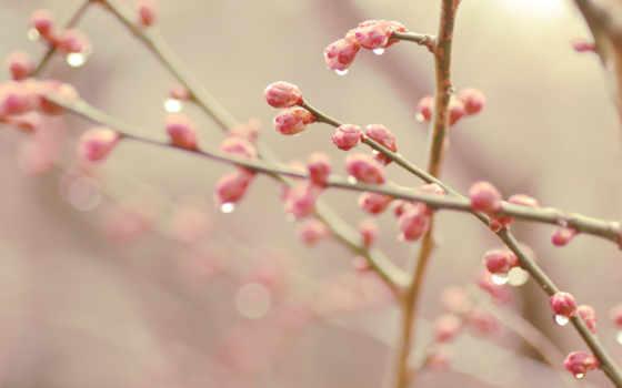 весна, bokeh, почки