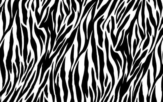 print, zebra, animal