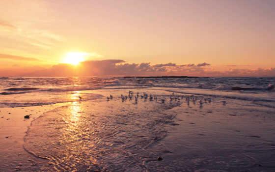 закат, birds, берег