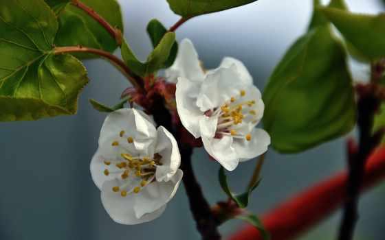makro, cvety, priroda